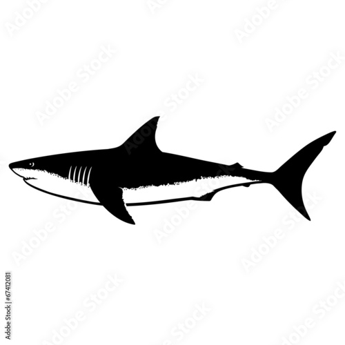 Fotografie, Obraz Great White Shark Silhouette Isolated on White