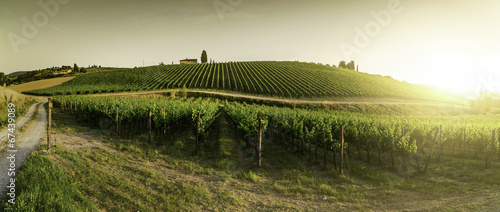 Fotobehang Beige Vineyards in Tuscany