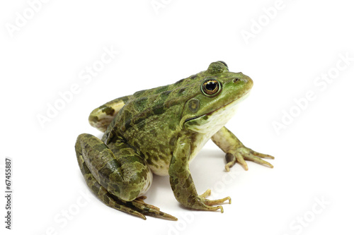 Tuinposter Kikker green spotted frog on white background