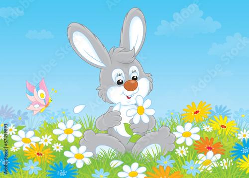 Photo Bunny with a daisy