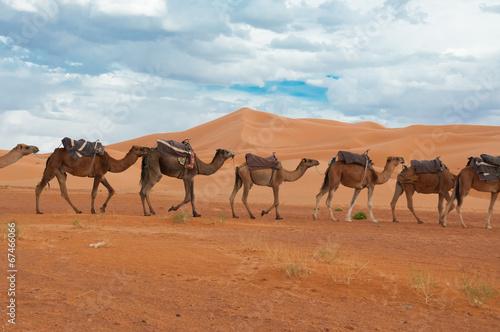 Spoed Foto op Canvas desert landscape