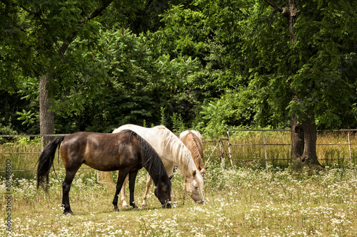 Photo  Horses in a Pasture
