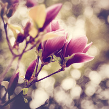 Abstract Floral Backgrounds With Magnolia Flowers And Beauty Bok