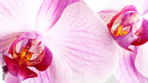 beauty pink orchid, abstract floral backgrounds