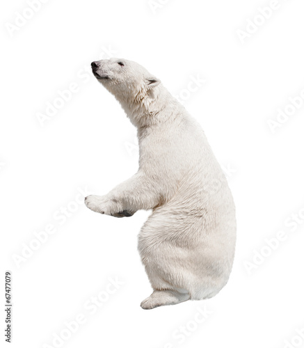 Deurstickers Ijsbeer White polar bear