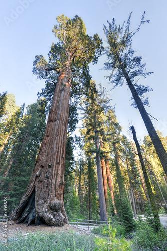 Keuken foto achterwand Verenigde Staten General Grant Sequoia Tree, Kings Canyon National Park