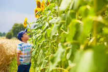 Stylish Caucasian Boy In Sunflowers