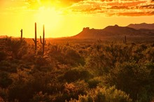 Sunset View Of The Arizona Desert With Cacti And Mountains