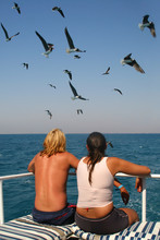 Lovers And Seagulls