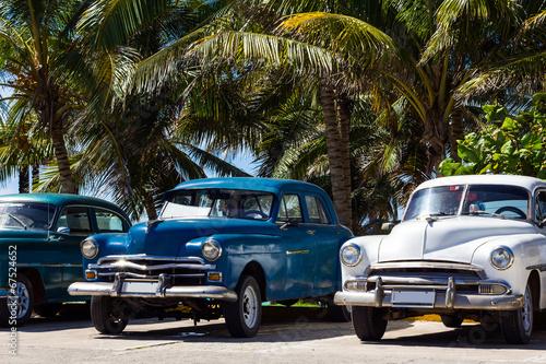 Kuba Oldtimer parkend unter Palmen Poster Mural XXL
