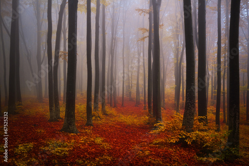 Foto Foggy mystic forest during fall