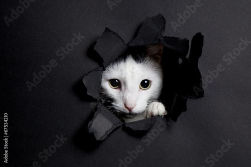 Weisse katze im hintergrund