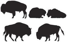 Bisonor Or Buffalo