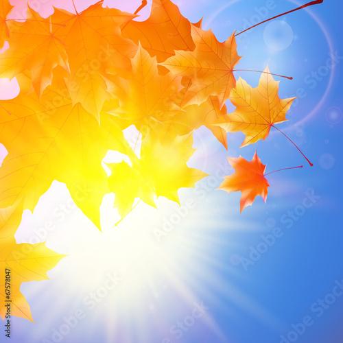 Fototapeta Delicate autumn sun with glare on blue sky. obraz na płótnie