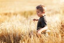 Boy In Wheat Field