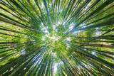 Bambusowe niebo