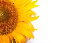 Sunflower Isolated On White Ba...