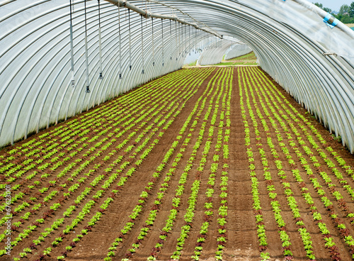 Obraz Crop of seedlings being cultivated in a tunnel - fototapety do salonu