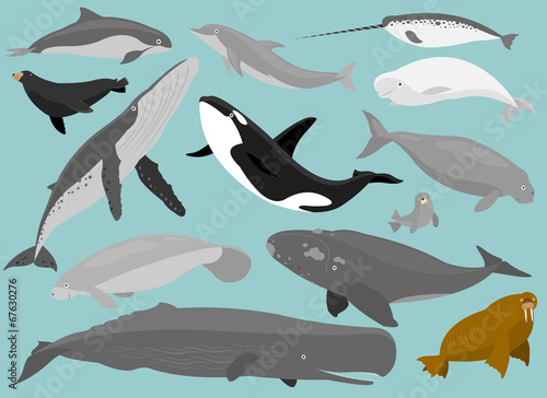 Cuadros en Lienzo Marine Mammals