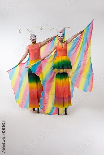 Fotografia, Obraz  rainbow butterfly