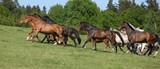 Konie wbiegające pod górkę