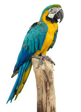 Beautyful Macaw Bird Isolated ...