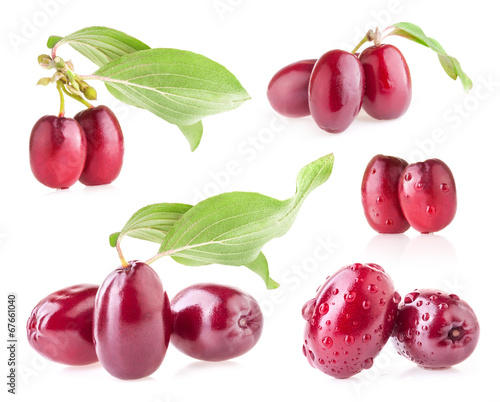 Valokuva  Collections of Cornel Berry isolated on white background