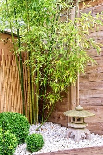 Papiers peints Jardin Japanese garden with bamboos and stone lantern