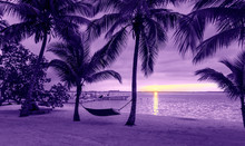 Palm Trees And Hammock On Trop...