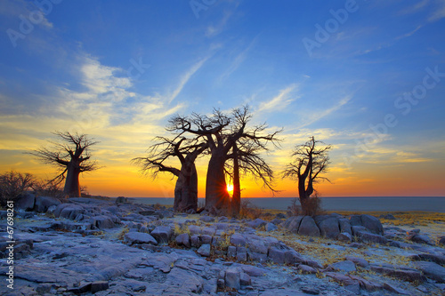 Aluminium Prints Africa Baobabs on Kubu at Sunrise