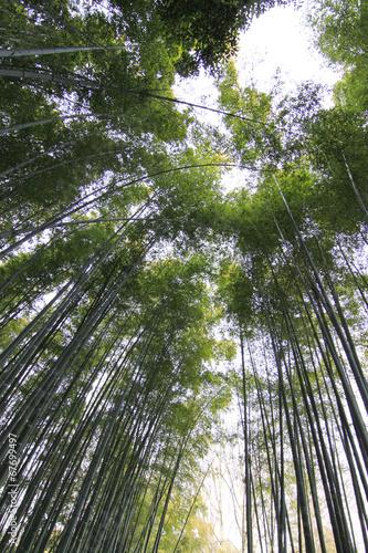 Printed kitchen splashbacks Khaki bamboo forest at kyoto japan