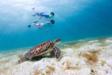 Family Snorkeling With Sea Tur...