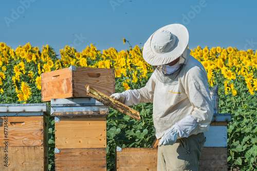 Photo Beekeeper working