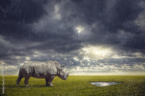 Cadres-photo bureau Rhino Thirsty Rhino