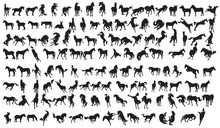 Horse Silhouette Collection.13...