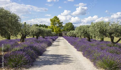 Montage in der Fensternische Lavendel Lavande champs Provence France