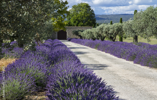 Photo Stands Lavender Lavande champs Provence France