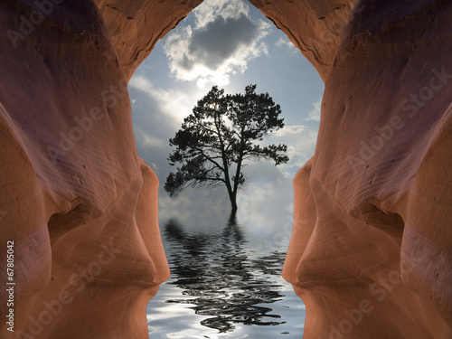 Poster Reflexion Desert Tree