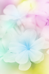 FototapetaClose-up of Flowers with Soft Focus Color Filtered.