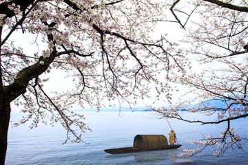Fototapeta Japoński Sakura season in Kaizu Osaki, Japan