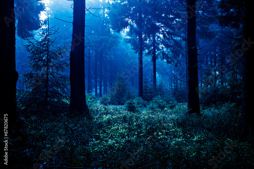 Garden Poster Forest night forest