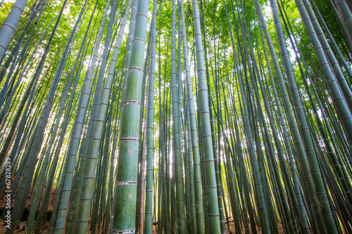 Papiers peints Bamboo The bamboo forest of Kyoto, Japan