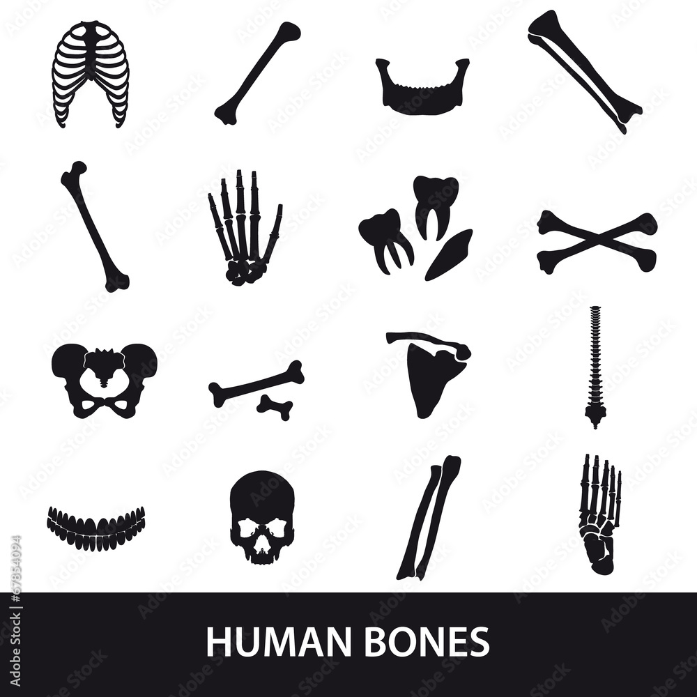 Human Bones Set Of Icons Eps10 Foto Poster Wandbilder Bei Europosters