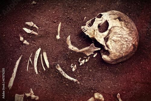 Fotografía  skull and bone