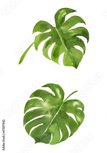 zielone-listki-na-bialym-tle