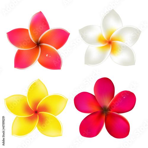 Color Frangipanis Set