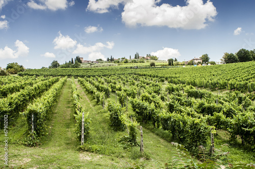 Fotografia  Vigneti sulle colline del Chianti in Toscana