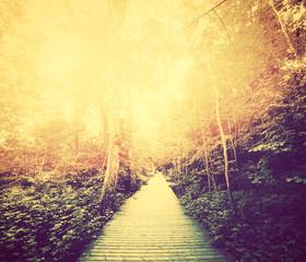 FototapetaAutumn, fall park. Sun shining through red leaves. Vintage
