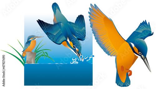 Photo  Oiseaux - Martin-pêcheur