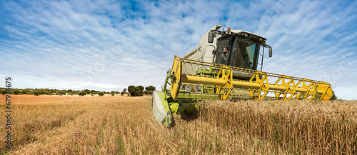 Fototapeta Spanish agriculture obraz